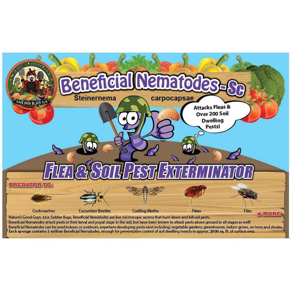 Live Beneficial Nematodes SC (500 Million __Nematodes_SC) by Bug Sales
