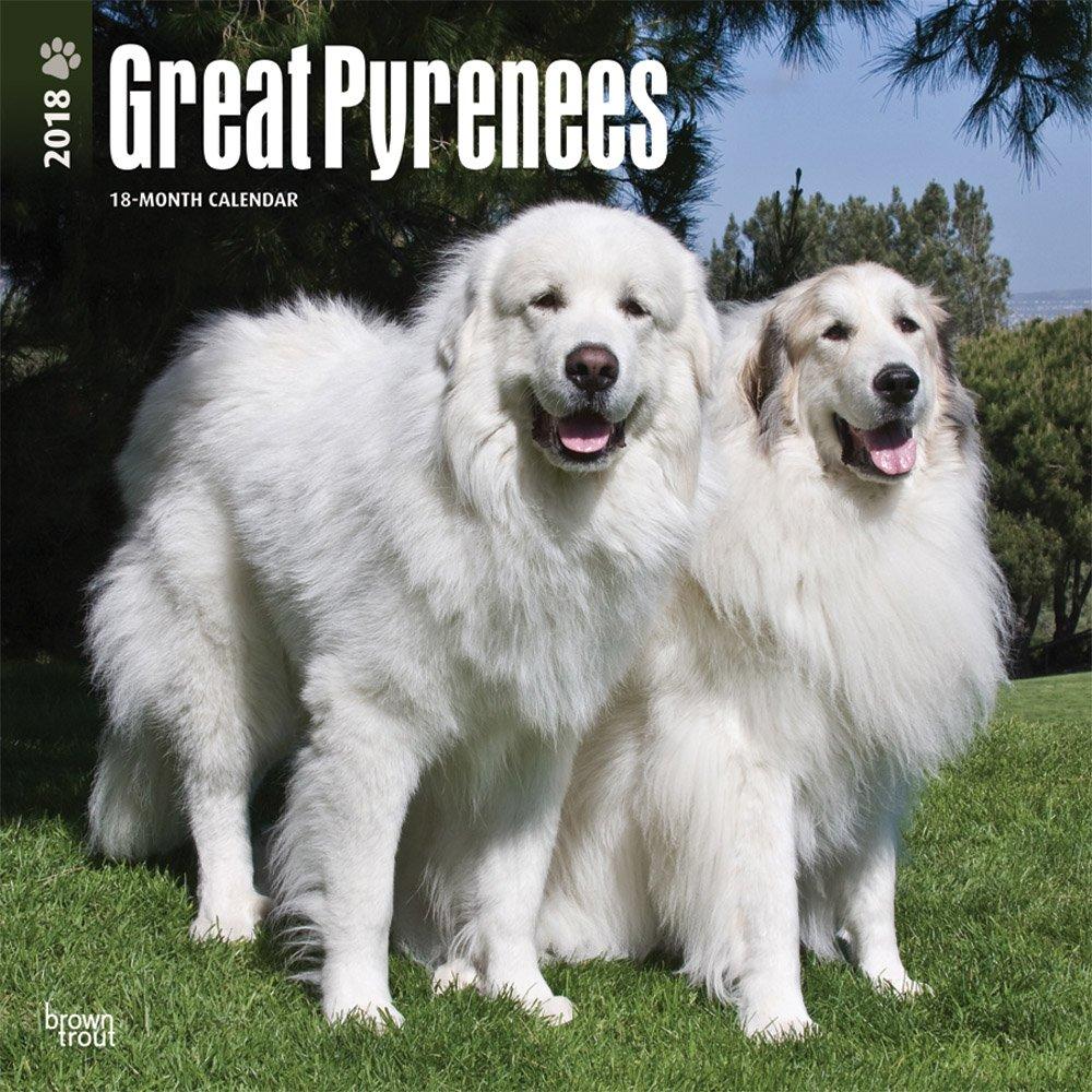 Great Pyrenees Pyrenäenhunde 2018 18 Monatskalender Mit Freier