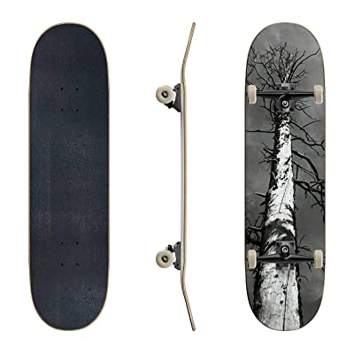 EFTOWEL Skateboards Dead Tree Mountain Stock Pictures Royalty Free Photos Images Classic Concave Skateboard Cool Stuff Teen Gifts Longboard Extreme Sports for Beginners and Professionals : Sports & Outdoors