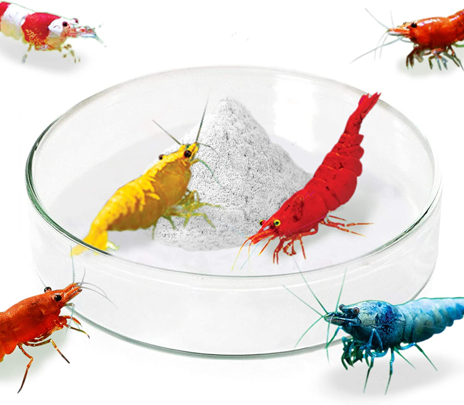 JOR Shrimp Feed Dish, 0.5 x 1.5 Inches, Tough Borosilicate Glass, Never Run Out of Food, Prevent Food Spilling, Heavy-Duty, Transparent Basin, for Shrimp Food or Fish's Tubifex Worms, 1 Piece