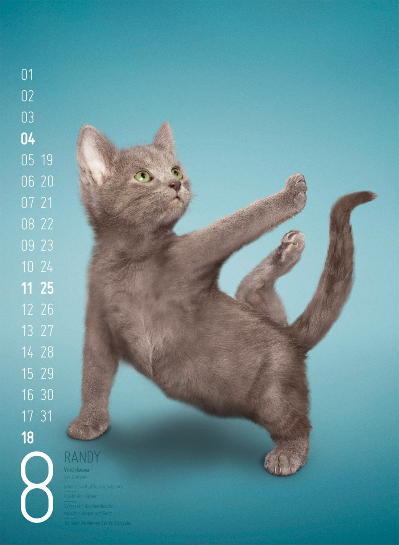 Yoga Cats 2013: 9783838413921: Amazon.com: Books