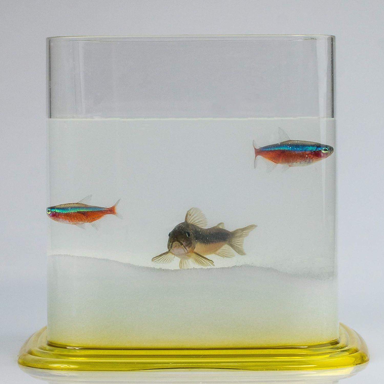 Aquariaglass Arena de Vidrio Fino Blanco para decoración de acuarios 2 kg Cristal: Amazon.es: Productos para mascotas