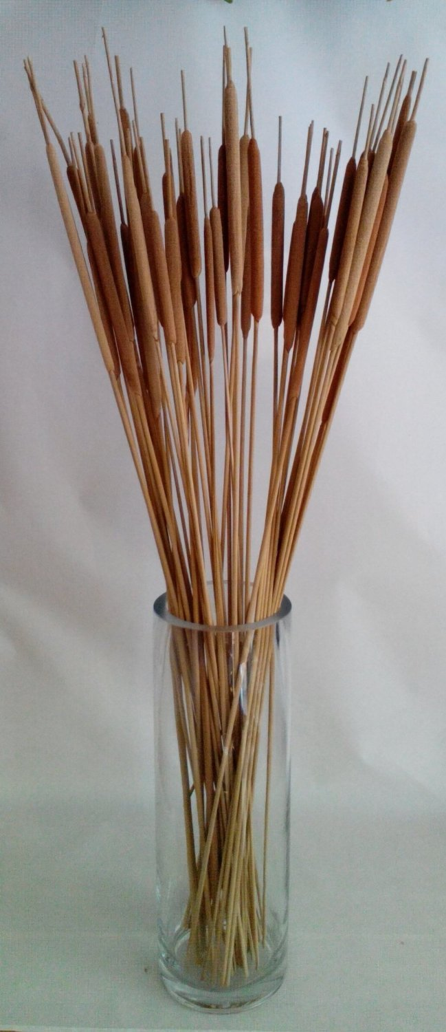 Worth Imports 3030 26 Pencil Cattail Bunch of 25, Light TAN