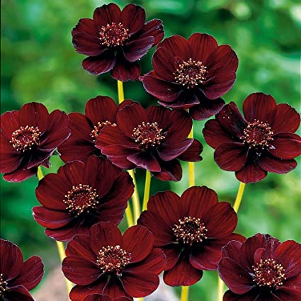 Nooelec Seeds India 5 Variety Of All Season Flower Seeds: Amazon.in: Garden & Outdoors