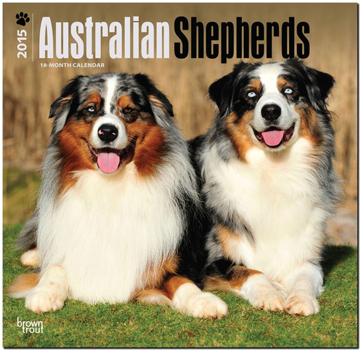Australian Shepherds 2015 - Australische Schäferhunde