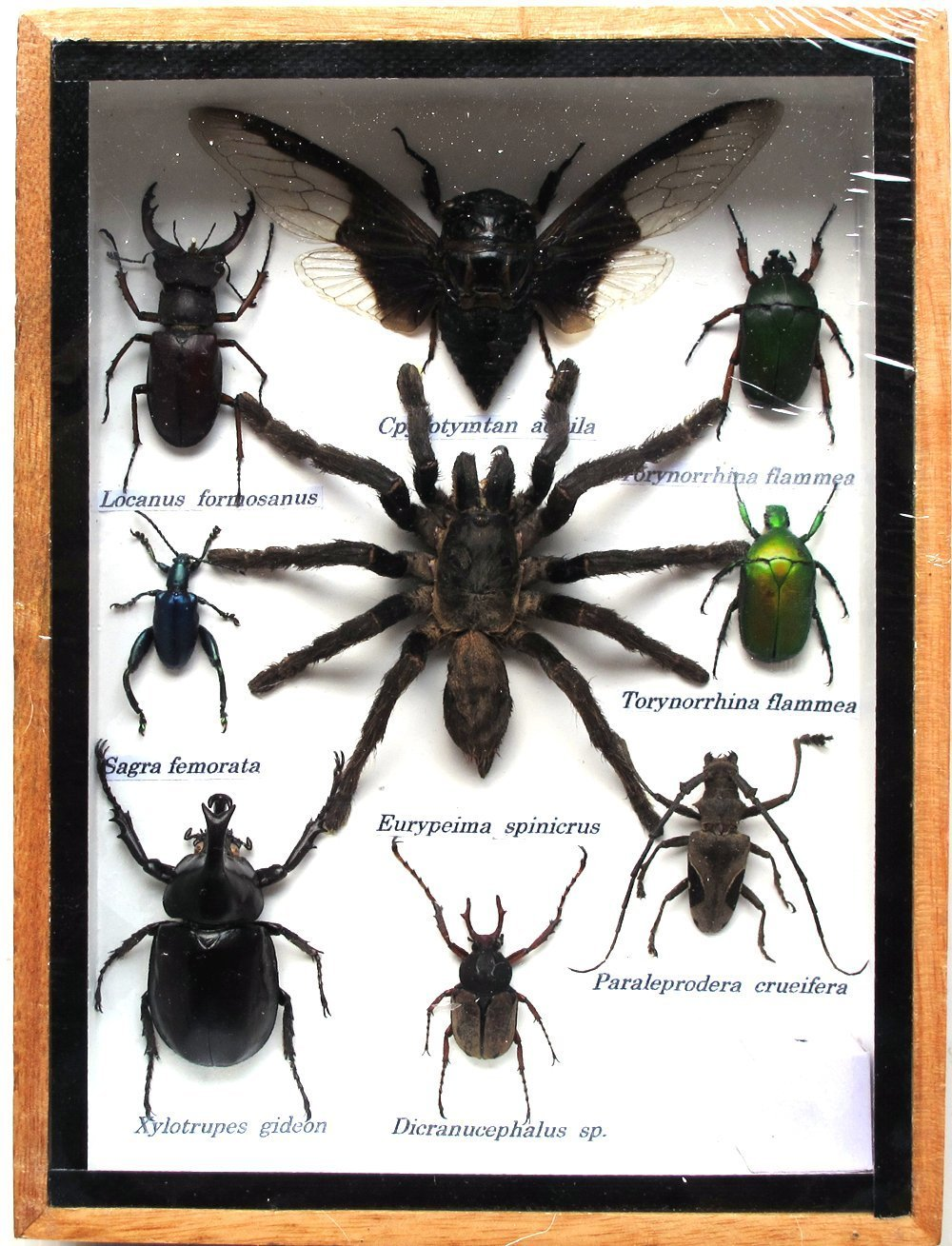Assorted Insect Taxidermy Set in Boxes Display Real Rare BIG Mixs