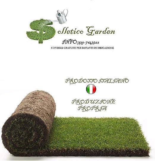 Auténtico césped listo para rollos de 40 m² 1ª elección en césped natural, no sintético (80 rollos) para jardín, 25 mq (50 rotoli): Amazon.es: Jardín