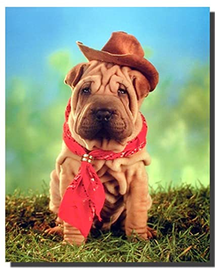 Amazoncom Cowboy Wall Decor Bulldog Puppy Kids Room Art Print