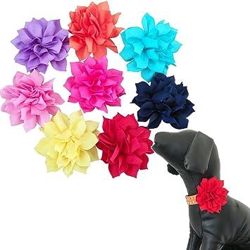 BIPY - Collares para perro, diseño de flores, para perros pequeños, gatos, cachorros y pajaritas, 8 unidades: Amazon.es: Productos para mascotas