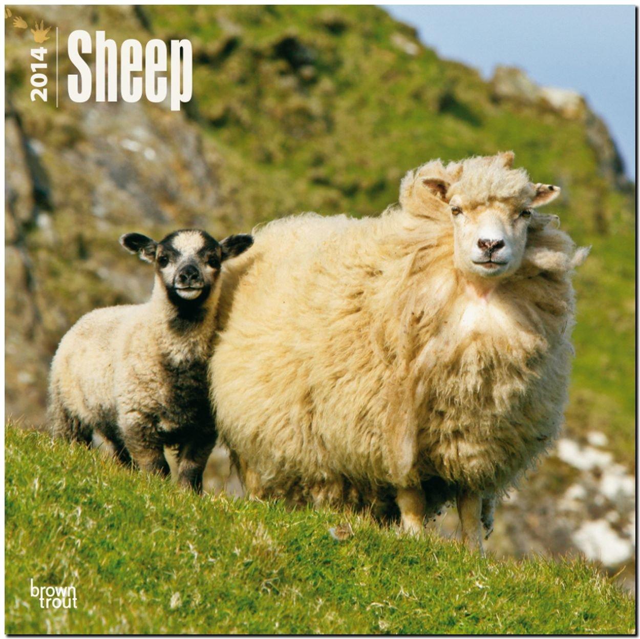 sheep-2014-schafe-original-browntrout-kalender-mehrsprachig-kalender