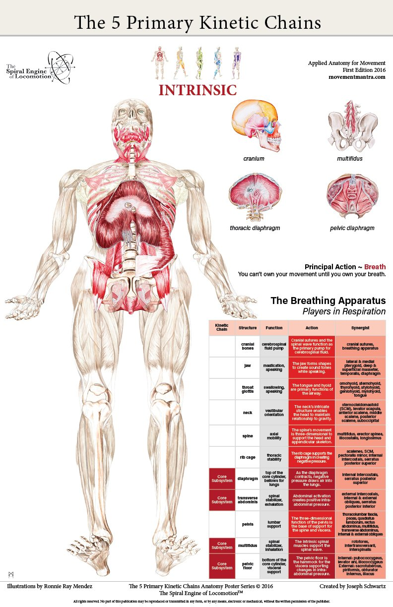 The Five Primary Kinetic Chains Poster Set: Joseph Schwartz, Ronnie ...