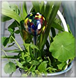 Milford Collection Hydroglobe plant waterer decoration - LARGE