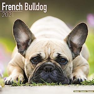French Bulldog Calendar 2021 - Dog Breed Calendar - Wall Calendar 2020-2021
