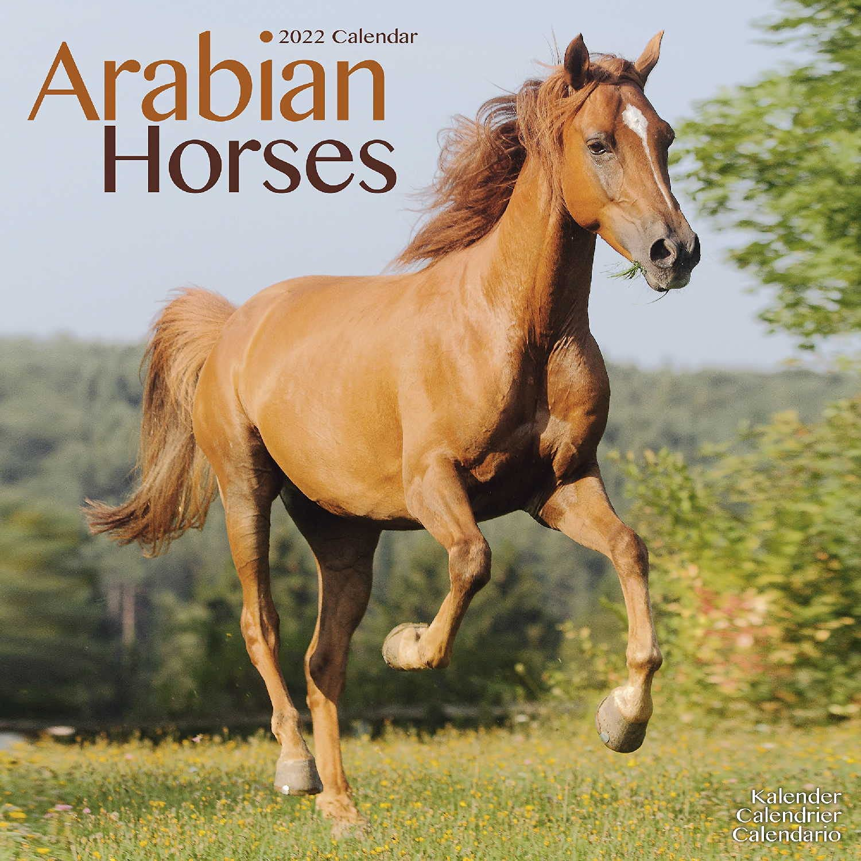 Horse Calendar 2022.Arabian Horse Calendar Calendars 2021 2022 Wall Calendars Only Arabian Horses Animal Calendar Arabian Horses 16 Month Wall Calendar By Avonside Megacalendars 9781839412509 Amazon Com Books