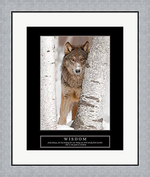 Amazon.com: Wisdom - Gray Wolf Framed Art Print Wall Picture, Flat ...