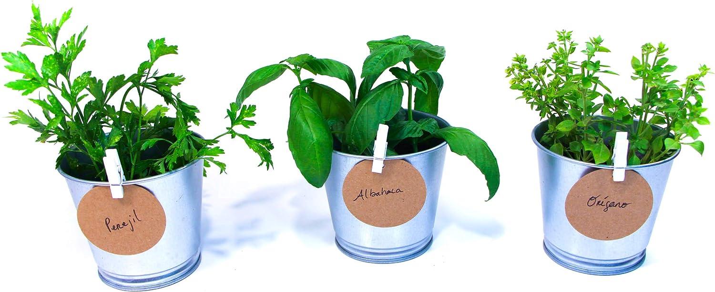 Green Up! Kit de Plantas–Kit completo de Hierbas Interior para Huerto Urbano–Cultiva tus propias Plantas y Hierbas Aromáticas–Kit de Cultivo Semillas 100% naturales (Albahaca, Orégano, Perejil)