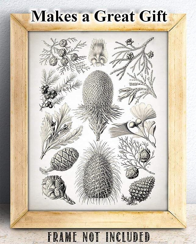 botanical illustration friend cotton screenprinting christmas gift art print birthday gift pineapple tote bag illustration