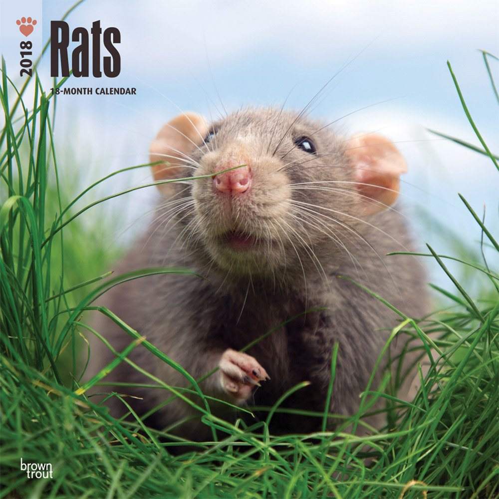 Rats 2018 12 x 12 Inch Monthly Square Wall Calendar, Domestic Animals Mouse (Multilingual Edition)