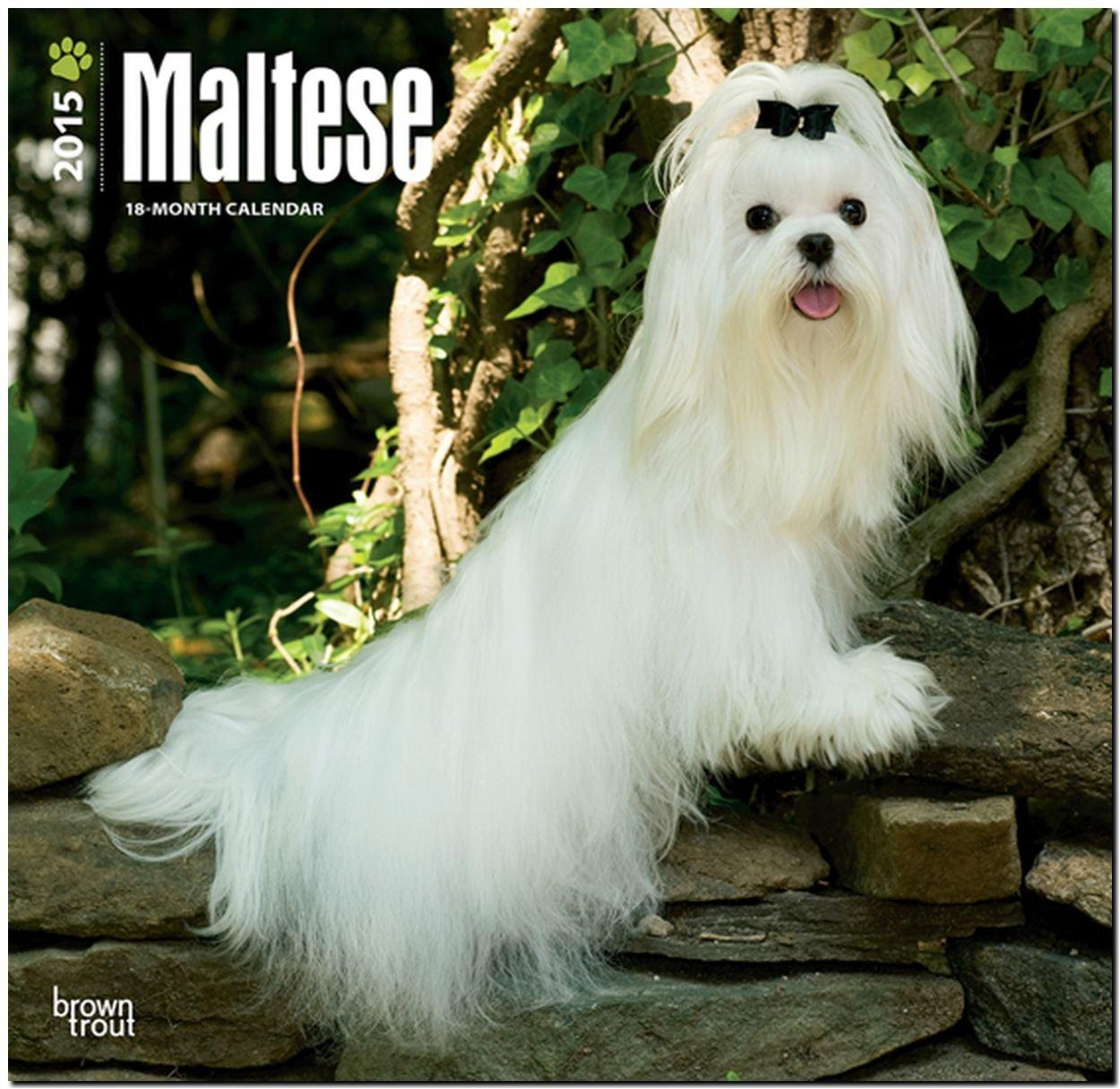 Maltese 2015 - Malteser: Original BrownTrout-Kalender [Mehrsprachig] [Kalender]
