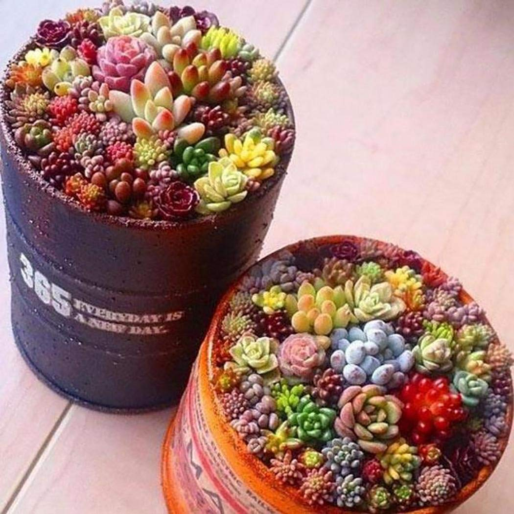 Zippem 100 Pcs Mixed Succulent Anti-Radiation Fleshy Seeds Potted Flower Cacti & Succulents