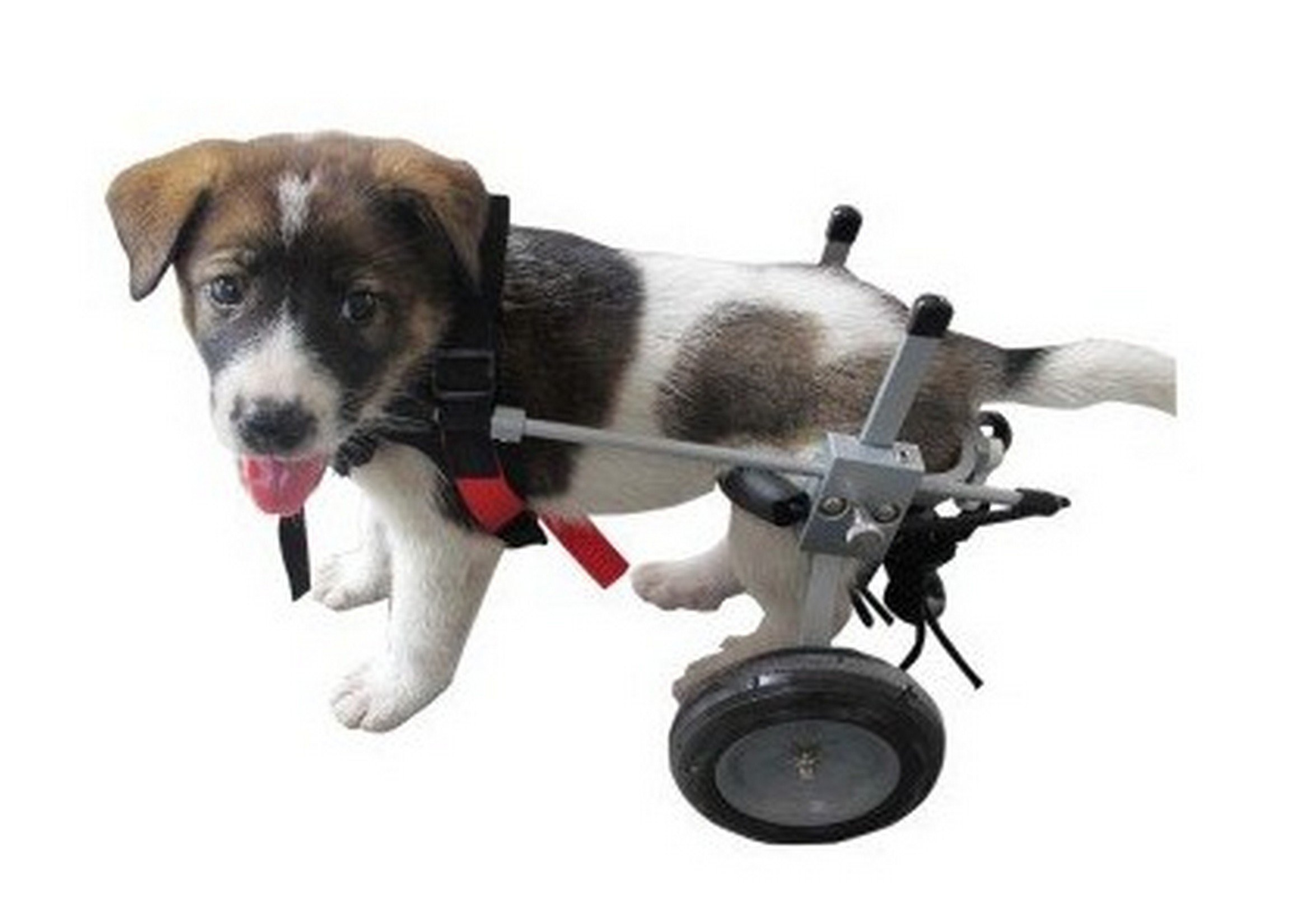 Small Dog Wheelchair Best Friend Mobility 14'' - 17'' See Sizing Chart