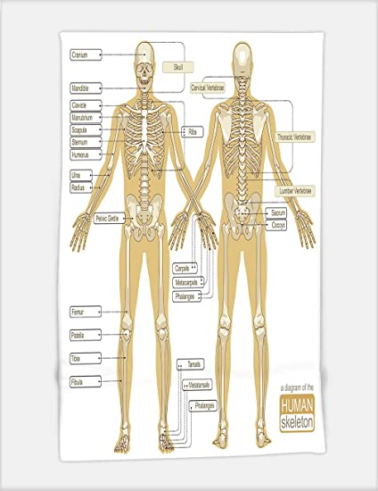Amazon Minicoso Bath Towel A Diagram Of The Human Skeleton Main