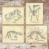 Dinosaur Bedroom Wall Decor Art Prints (Set of 4) - Unframed - 8x10s
