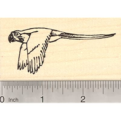 Macaw Bird Rubber Stamp, New World Parrot: Arts, Crafts & Sewing