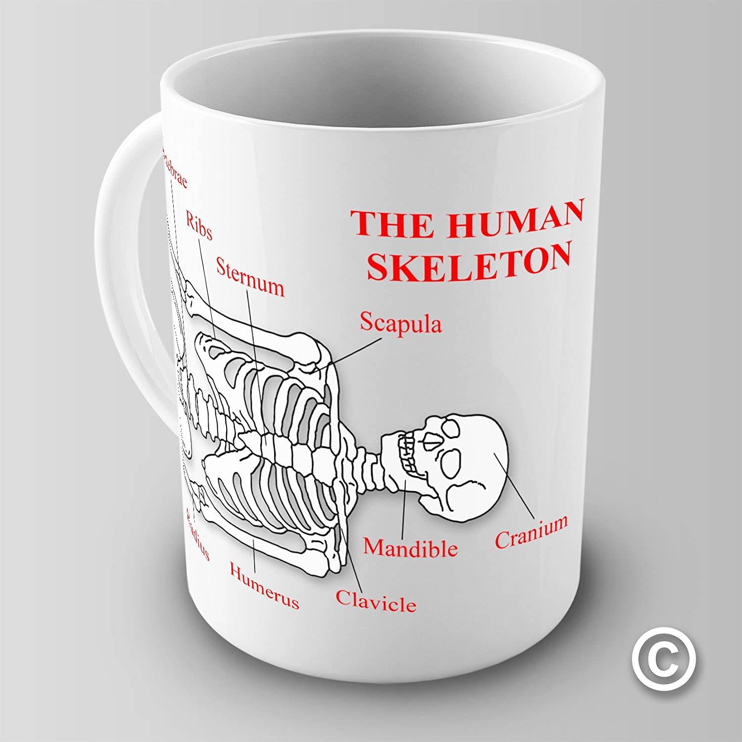 Amazon Educational Mug The Human Skeleton Anterior View