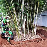 Bamboo Shield - 50 feet Long x 24 inch x 60 mil