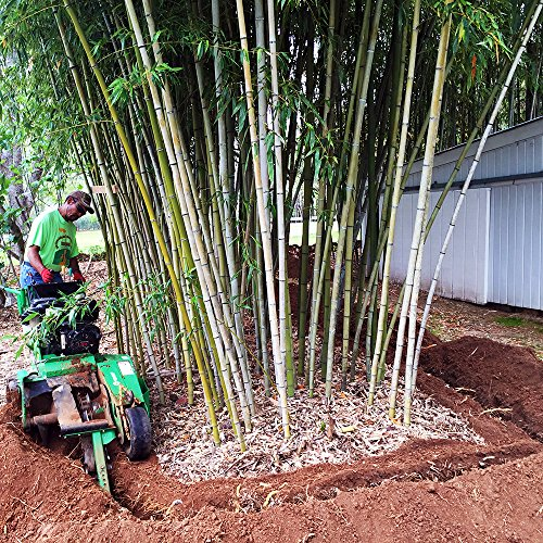 Bamboo Shield – 50 Foot Long X 30 Inch Wide 80mil Bamboo Root Barrier/Water Barrier by Bamboo Shield (Image #2)