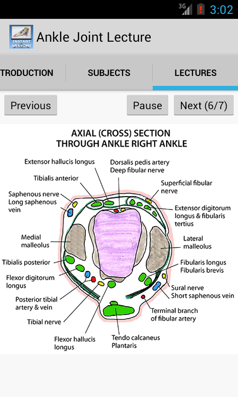 Amazon Anatomy Of The Ankle Joint Appstore For Android