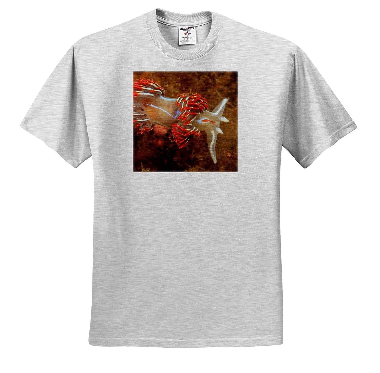 Nudibranch Near Sitka ts/_314535 Southeast Alaska USA Adult T-Shirt XL Underwater 3dRose Danita Delimont