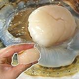 『特選』活ほたて 大サイズ3キロ 青森県陸奥湾産 漁師直送 ホタテ 大3kg