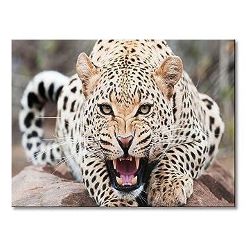 Animal Canvas Wall Art Roaring Leopard Print Painting Modern Cheetah on Stone Brown Picture Giclee Artwork  sc 1 st  Amazon.com & Amazon.com: Animal Canvas Wall Art Roaring Leopard Print Painting ...