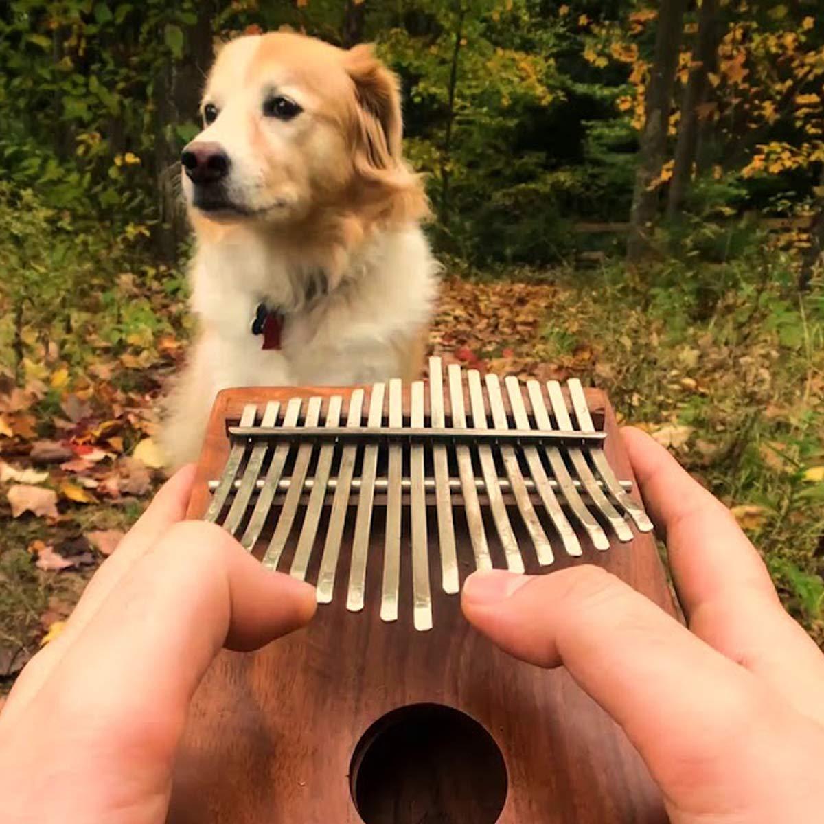 Elejolie Kalimba 17 Keys Thumb Piano Portable Beginner Piano Entry Finger Piano Mahogany Wood Best Gift for You by Elejolie (Image #6)