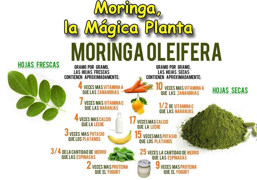 MORINGA OLEIFERA COMPLEX 4.000 mg. 2 x 60 Cáps. NATURE ESSENTIAL: Amazon.es: Salud y cuidado personal