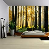 Wall26 A Peaking View Through the Forest of the Morning Sunrise - Wall Mural, Removable Sticker, Home Decor - 100x144 inches