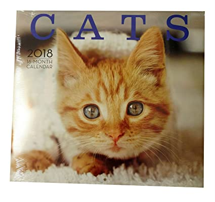2018 calendario de pared gatos y Cute gatitos 16 meses con directorio personal