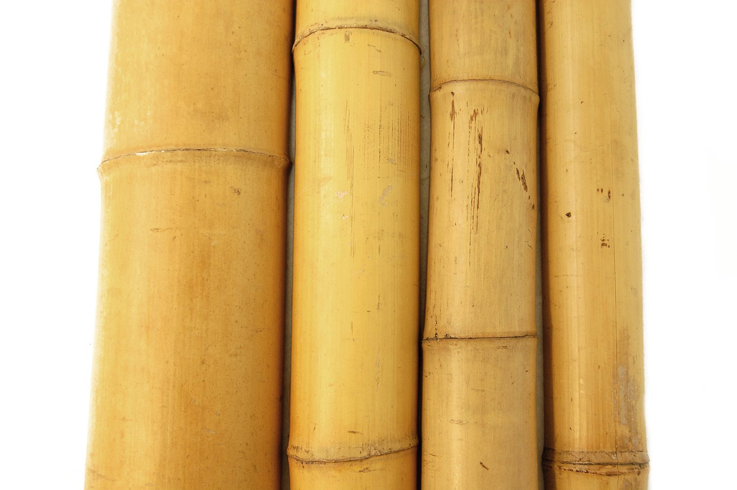 Forever Bamboo Bamboo Poles 2in D x 10ft L (10Pieces)