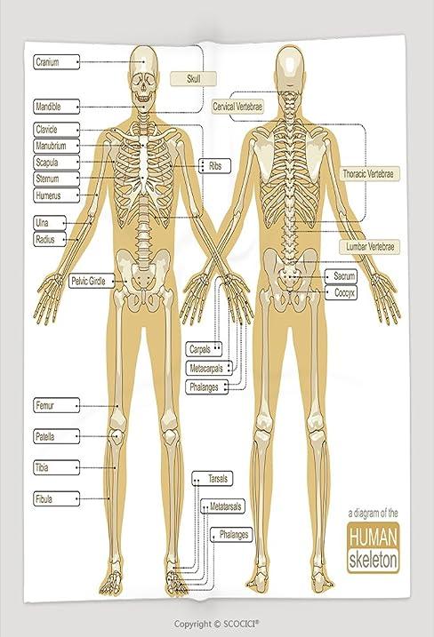 Amazon Custom Throw Blanket A Diagram Of The Human Skeleton