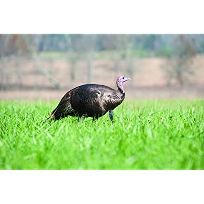 Nature's Seed 2.5 Acre Florida Tropics Upland Game Food Plot Pasture Blend : Garden & Outdoor