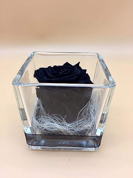 Rosa eterna Negra. Gratis TU ENVÍO. Rosas eterna Negras. Rosa preservada Negra. Hecho en España.: Amazon.es: Hogar