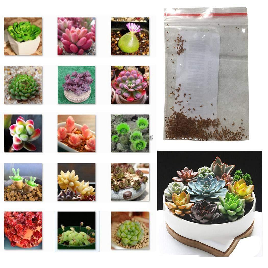 20pcs//Pack Beautiful Albizia Julibrissin Bonsai Flower Acacia Seeds WT88 04