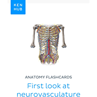 Anatomy flashcards: First look at neurovasculature: Learn all arteries, veins and nerves on the go (Kenhub Flashcards…