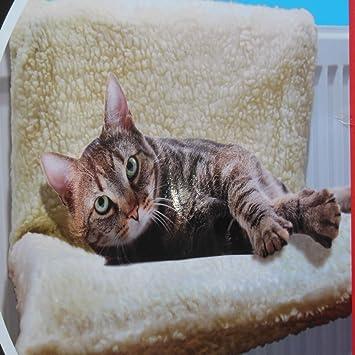 dog radiator bed