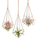 Dahey 3 Pcs Hanging Air Plant Holder Himmeli Geometric Planter Metal Airplant Rack Tillandsia Hanger with Chain in Modern Rus