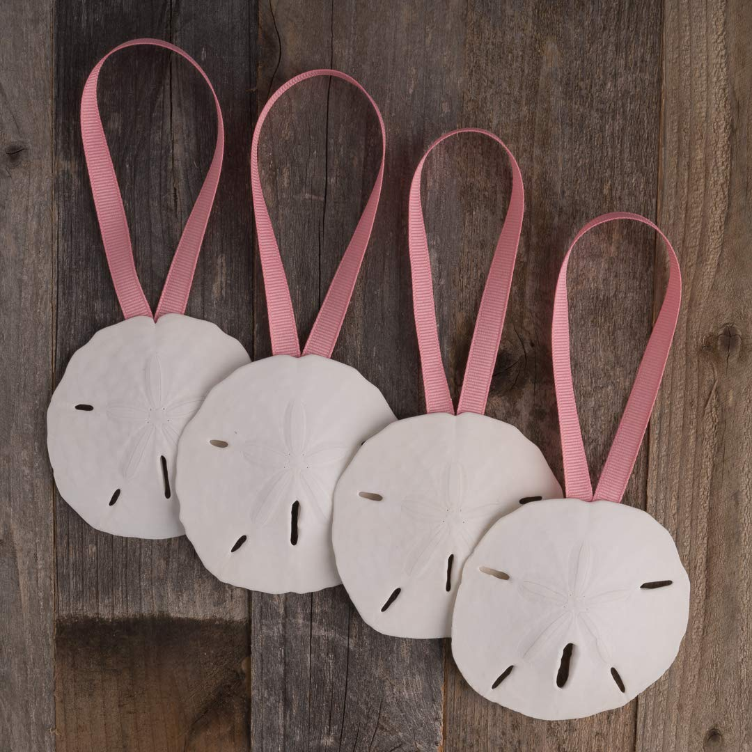 Real Sand Dollars for Beach Wedding Decor Plus Free Nautical eBook by Joseph Rains Sand Dollar Ornaments Natural Sand Dollars 3 with Seafoam Ribbon Set of 4