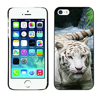 INDIAN AFRICAN TIGER FURRY NATURE WHITE SNOW: Amazon.es ...