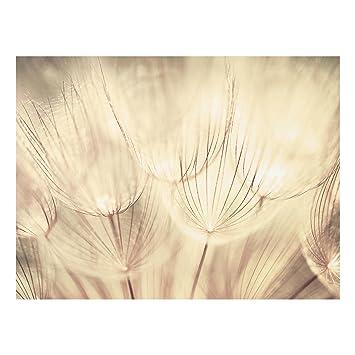 Bilderwelten Spritzschutz Glas Pusteblumen Nahaufnahme In